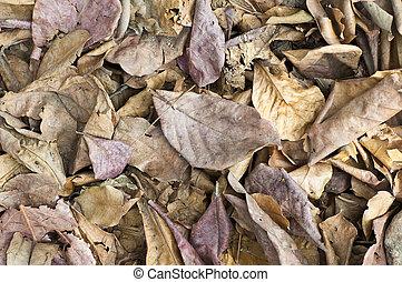 Dry leaves.