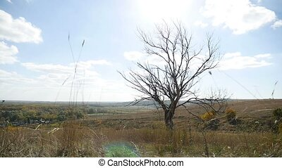 Dry lonely in the field tree on a background of blue sky autumn nature