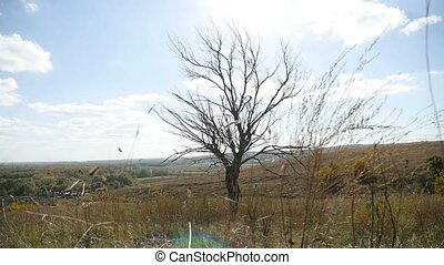 Dry lonely tree in the field on a background of blue sky autumn nature
