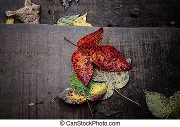 Dry maple leaves fall on the wood floor in autumn.