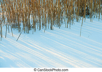 dry marsh grass in snow drifts on a sunny winter day