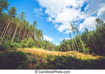 Dry meadow in a pine tree forest