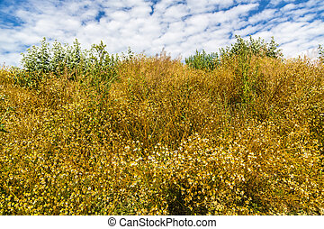 dry meadow on a hill in summer, with cloudy sky