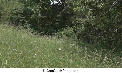 Dry meadow (upland meadow) and shrubs