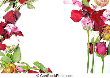 Dry petals of roses on white background