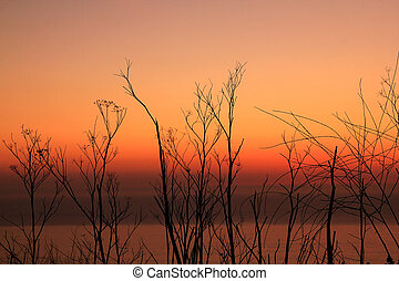 dry plant at sunset