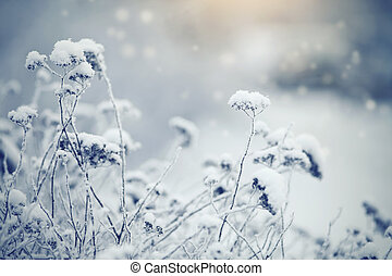 Dry plants in hoarfrost and snow