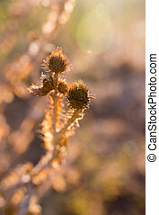 Dry prickly plant at sunset