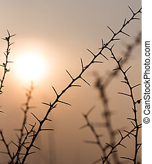 Dry prickly plant on the sunset background