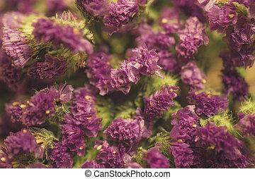Dry purple flowers of limonium