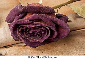 dry red rose