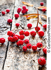 dry red rowan on a wooden background selective focus