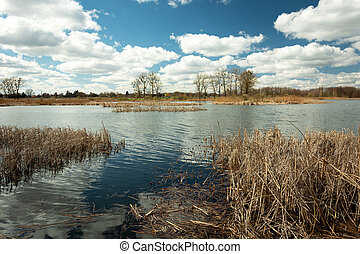 Dry reeds growing in a calm lake and clouds on the blue sky
