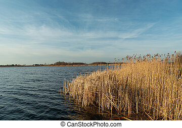 Dry reeds in the blue lake water