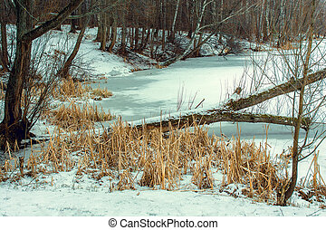 Dry Reeds On Frozen Pond