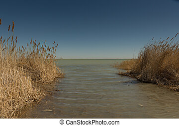 Dry reeds on the shore of the Aral sea. Kazakhstan