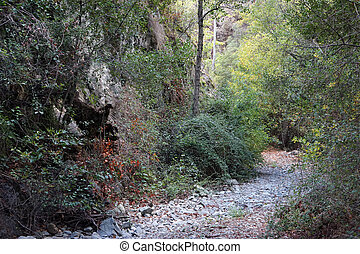 Dry river bed in the forest