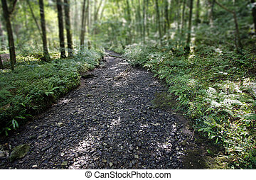 Dry river bed running through a forest