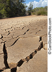 Dry river bed with plants