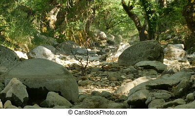 Dry Rocks on Riverbed - Dry riverbed in a forest.