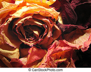 dry roses background - dry dead roses red color background...