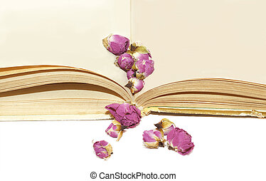 Dry roses on old book page spreads