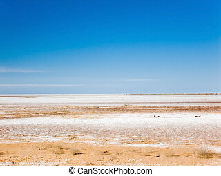 Dry salt lake - Dry salt bed of Lake Frome, Australia