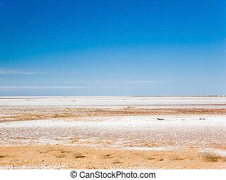 Dry salt lake - Dry salt bed of Lake Frome, Australia