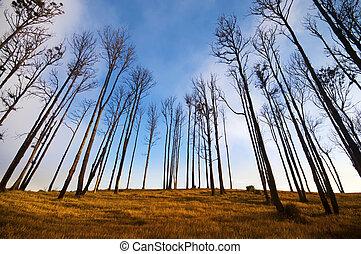 Dry season. - Autumn tree view at Cemoro Lawang, east Java,...