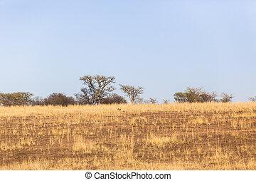 Dry Season Landscape - Fields trees grass in dry season in...