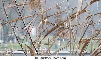 Dry sedge swayed slightly from the wind