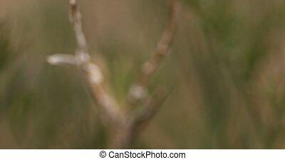 Dry spiklet of weed macro handheld shot 4k footage