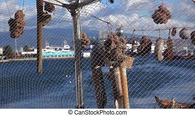 Dry Sponge behind Fishnets