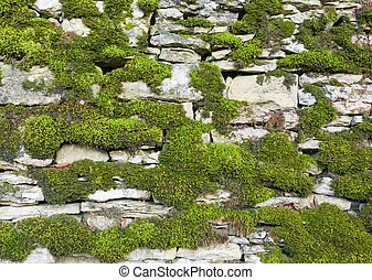 Dry stone wall covered in moss. Oxfordshire Cotswolds, UK