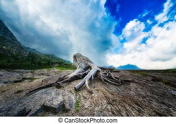 Dry stump at mountain