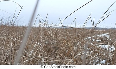 dry the grass marsh winter reed nature beautiful landscape -...