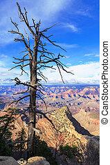 Dry tree above South Rim of Grand Canyon, Arizona, United States