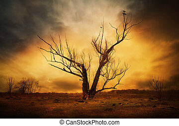 dry tree and crows on the branches - dry tree in field and...