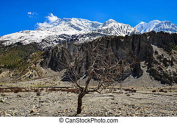 Dry tree and Himalayas mountain range