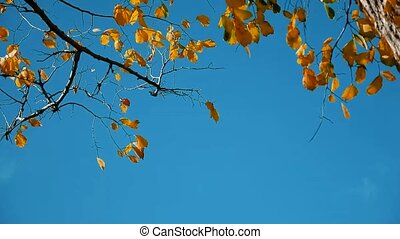 Dry tree autumn leaves dry tree against the blue sky branch...