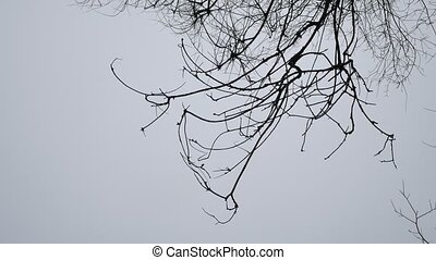 Dry tree branch autumn on a white background outdoors nature...