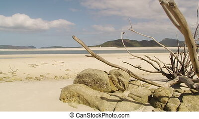 Dry tree branch by the beach - A dry tree branch surrounded...