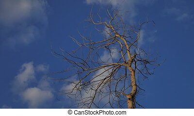 Dry tree branch on a blue background nature - Dry tree...