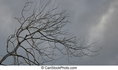 Dry tree branch on a grey sky nature background - Dry tree...