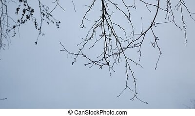 Dry tree branch on a white background outdoors nature - Dry...