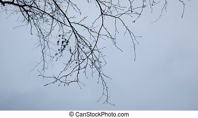 Dry tree branch on a white background nature outdoors - Dry...