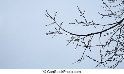 Dry tree branch on a white outdoors background nature - Dry...