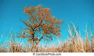 Dry tree dry grass autumn leaves dry tree against the blue...