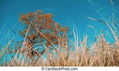 Dry tree dry grass motion autumn leaves dry tree against the...