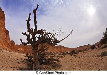 Dry tree in ancient mountains